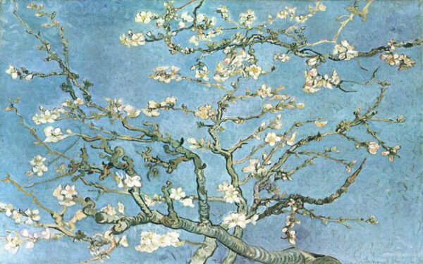 almond-blossoming-tree